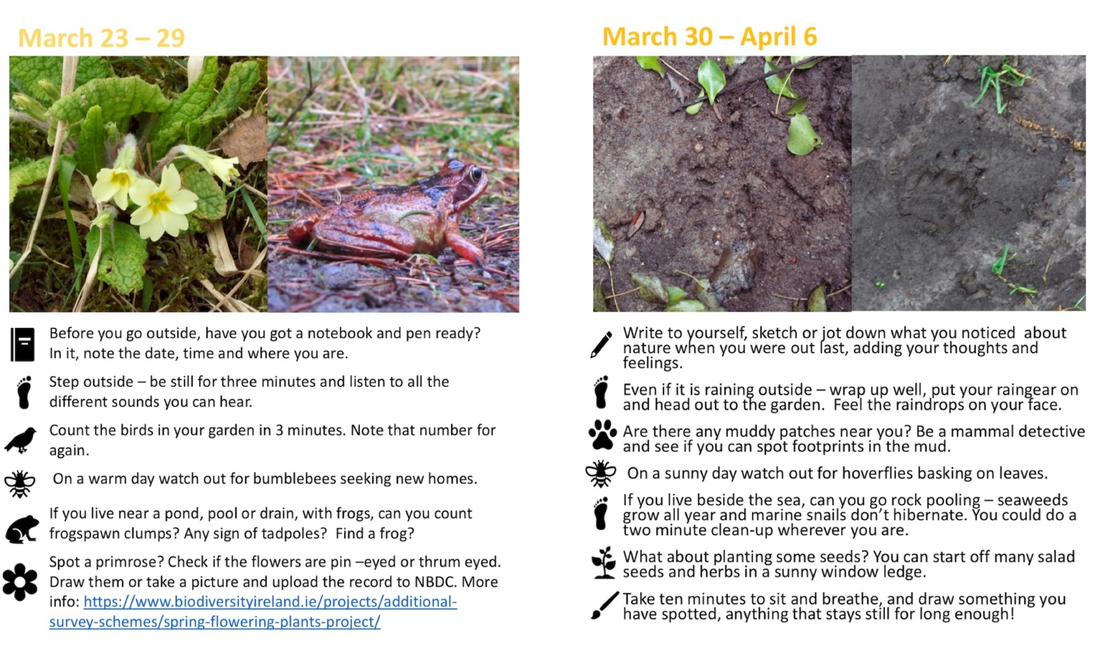 Nature Diary March